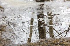 Fjädra bakgrund, lönn reflekterad i meltvatten Royaltyfri Foto