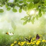Fjädra bakgrund. maskros i en äng och en fjäril arkivbild