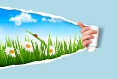 Fjädra bakgrund med blommor, gräs och en ladybu Arkivbild