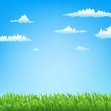 Fjädra bakgrund med gräs Royaltyfria Foton