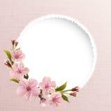 Fjädra bakgrund med rosa körsbärsröda blommor Royaltyfria Bilder