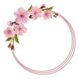 Fjädra bakgrund med rosa körsbärsröda blommor Arkivbilder