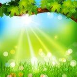 Fjädra bakgrund med trees och gräs Royaltyfri Fotografi