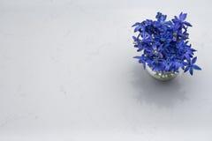 Fjädra blåa lösa blommor Scilla i vas på adelsmanCarrara kvarts Arkivfoto