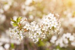 Fjädra blom, blomning i solljusnärbilden, suddig abstrakt naturbokehbackgroud arkivfoto