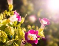 Fjädra blommabakgrund Royaltyfri Bild