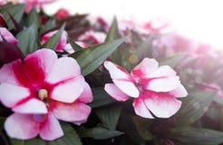 Fjädra blommabakgrund Arkivbild