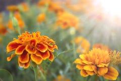 Fjädra blommabakgrund Arkivfoto