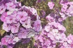 Fjädra blommablomningen Royaltyfria Bilder