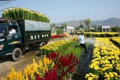 Fjädra blomman, Vietnam Tet, asiatisk bonde Arkivfoton