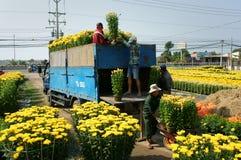 Fjädra blomman, Vietnam Tet, asiatisk bonde Arkivbild