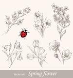 Fjädra blommauppsättningen Arkivbilder