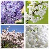 fjädra blommor royaltyfri foto
