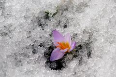 Fjädra blommor. royaltyfri foto