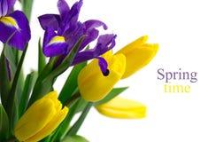 Fjädra blommor - gula tulpan och slösa irises Arkivfoton