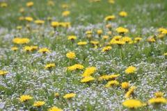 Fjädra blommor i bergen Arkivbild