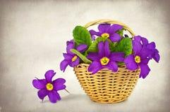 Fjädra blommor i korgen Fotografering för Bildbyråer