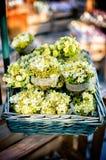 Fjädra blommor i korgen Royaltyfri Bild