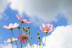 Fjädra blommor på den molniga skyen för blått Royaltyfri Foto