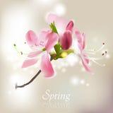 Fjädra blomningen Arkivfoton