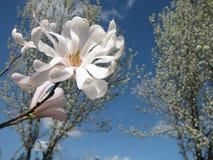 Fjädra blomningen Royaltyfri Fotografi