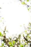 Fjädra blomningmallen Arkivfoton
