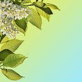 Fjädra blomstra bakgrund - abstrakt blom- gräns av gräsplan l Fotografering för Bildbyråer