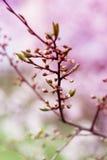 Fjädra blomstra vårblommor på ett plommonträd mot mjuk flo Royaltyfria Foton