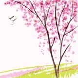 Fjädra den blomma treen Royaltyfri Foto