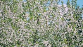 Fjädra den blomma treen arkivfilmer