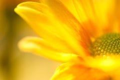 Fjädra den orange blommacloseupen arkivbilder