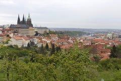 Fjädra den Prague staden med den gotiska slotten och de gröna natur- och blomningträden, Tjeckien Royaltyfri Foto
