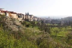 Fjädra den Prague staden med den gotiska slotten och de gröna natur- och blomningträden, Tjeckien Royaltyfria Bilder