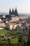 Fjädra den Prague staden med den gotiska slotten och de gröna natur- och blomningträden, Tjeckien Arkivfoton