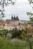 Fjädra den Prague staden med den gotiska slotten och de gröna natur- och blomningträden, Tjeckien Arkivbild