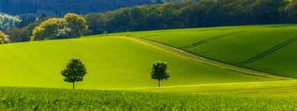 Fjädra den tid… ron lämnar, naturlig bakgrund Royaltyfri Fotografi