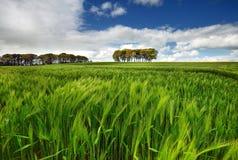 Fjädra den tid… ron lämnar, naturlig bakgrund Royaltyfri Foto