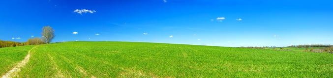 Fjädra det lantliga landskapet med fältet och blå himmel, en panorama royaltyfri fotografi