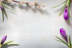 Fjädra easter blom- abstrakt bakgrund med krokus- och pussypilen Royaltyfri Bild
