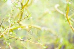 Fjädra eller sommarnaturbakgrund Arkivfoto