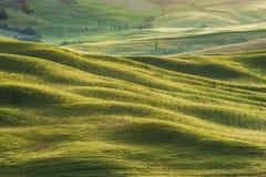 Fjädra fältet runt om Pienza, på vägen Royaltyfri Fotografi