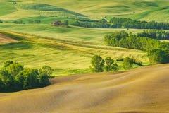 Fjädra fältet runt om Pienza, på vägen Royaltyfria Foton