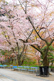Fjädra fläcken i Nara på den forntida templet, 'parkerar Hasedera' med naturligt för att koppla av och tycka om Arkivbild