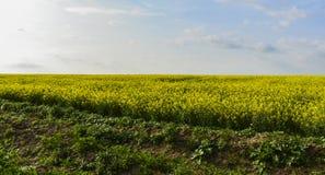 Fjädra gröna ändlösa fält nära byn av Srebarna som är 15 km bort västra av områdesstaden av Silistra, på westeren arkivbilder