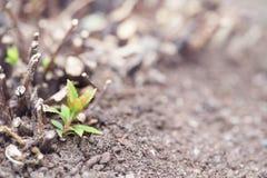 Fjädra grodden av en buske bland den gråa jorden royaltyfria bilder