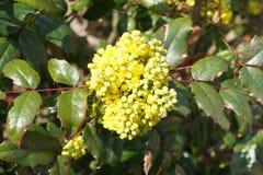 Fjädra gula blommor Arkivfoto