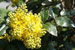Fjädra gula blommor Fotografering för Bildbyråer