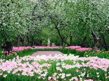 Fjädra i äppleträdgård Arkivfoton