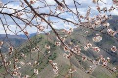 Fjädra i bergen Royaltyfri Foto