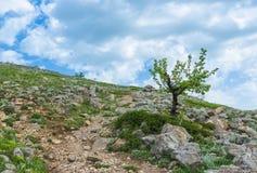 Fjädra i Crimean berg på en höjd ovanför 1000 metrar Royaltyfri Bild